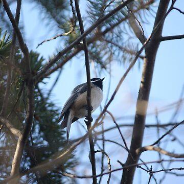 Bird in tree. by DavidGelhar