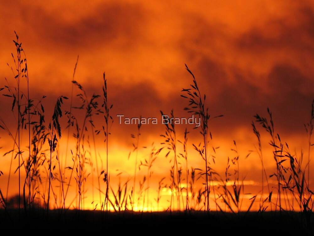 Autumn sunset by Tamara Brandy