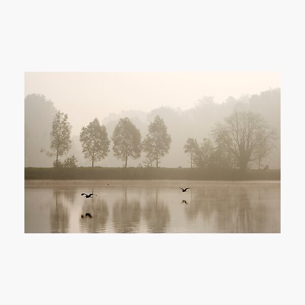 Flying herons Photographic Print