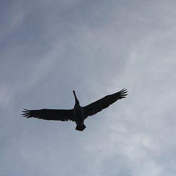 Pelican by DavidGelhar