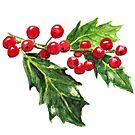 Holly Branch, Green Leaves and Red Berries by birdsandberry