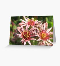 Chicks & Hens in BLOOM! Greeting Card