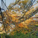 Prayer Flags by Harry Oldmeadow