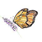 Monarch Butterfly Art, Orange Butterfly by birdsandberry