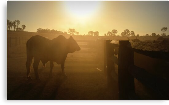A SUN BURNT COUNTRY by Barbara  Jean