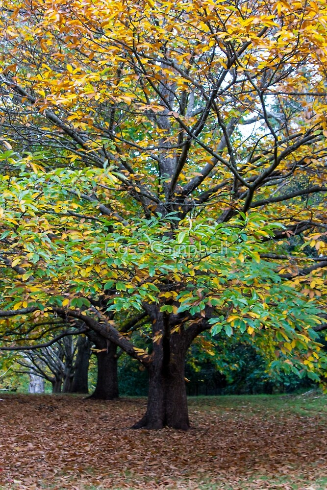 Autumn Leaves by Ross Campbell