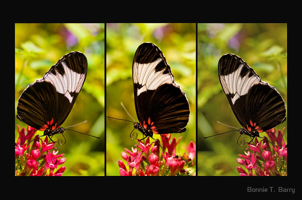Butterfly Panel by Bonnie T.  Barry