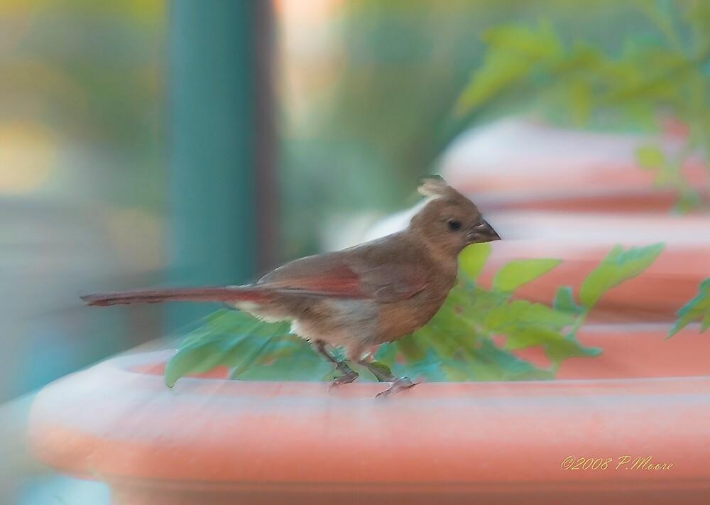 Baby Cardinal by Pat Moore