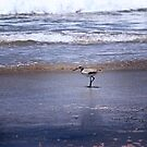 Bird by the sea by HeavenOnEarth