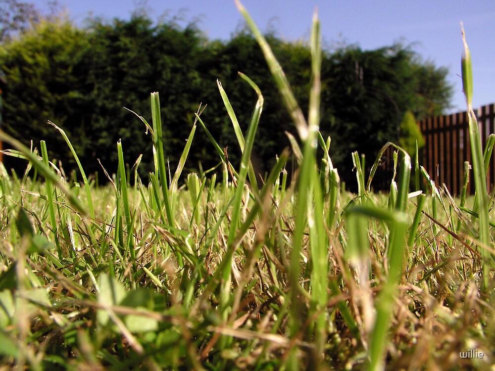 Grass by willie