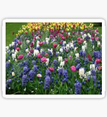 A Riot of Colour - Tulips and Hyacinths Sticker