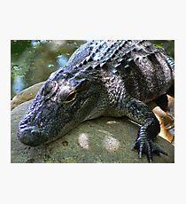 Alligator Photographic Print