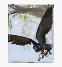 Carnaby's Cockatoo flying out of a Gum tree. iPad Case/Skin