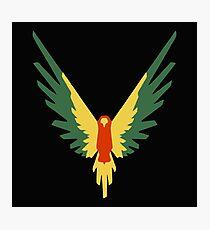 Maverick Birds Flying Photographic Print