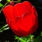 Tulip Heart by Danielle Loscig
