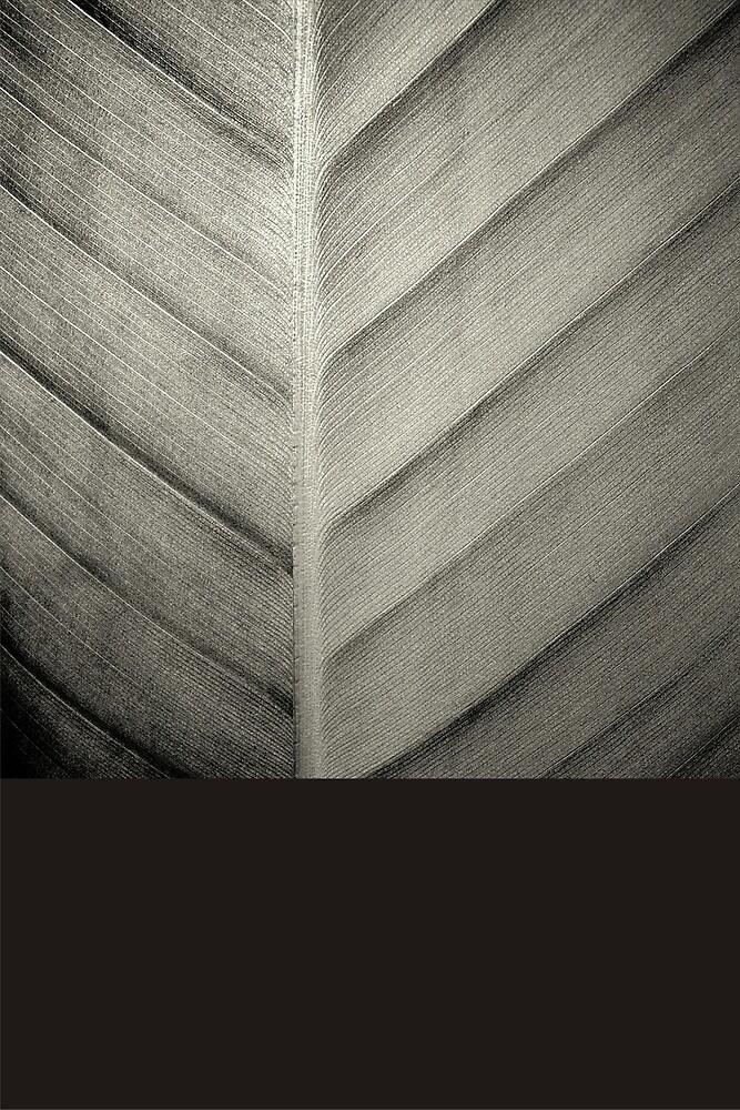 Leaf Black & White by nileshkikuchise