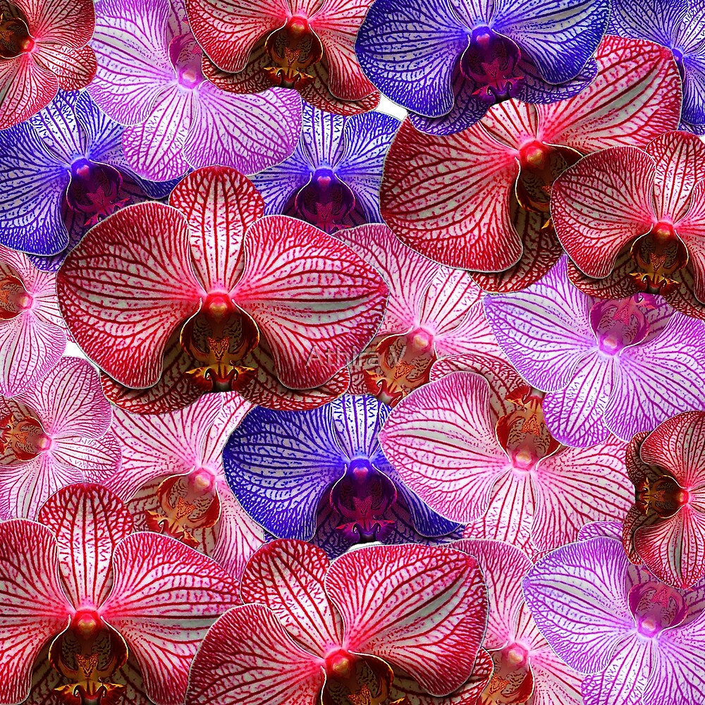 Orchid story  by Athira V