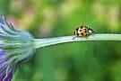 22 spot ladybird by missmoneypenny