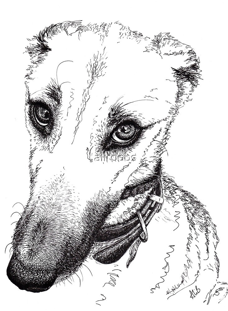 Rufus the Lurcher by aliroobs