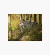Timber Wolf Art Board