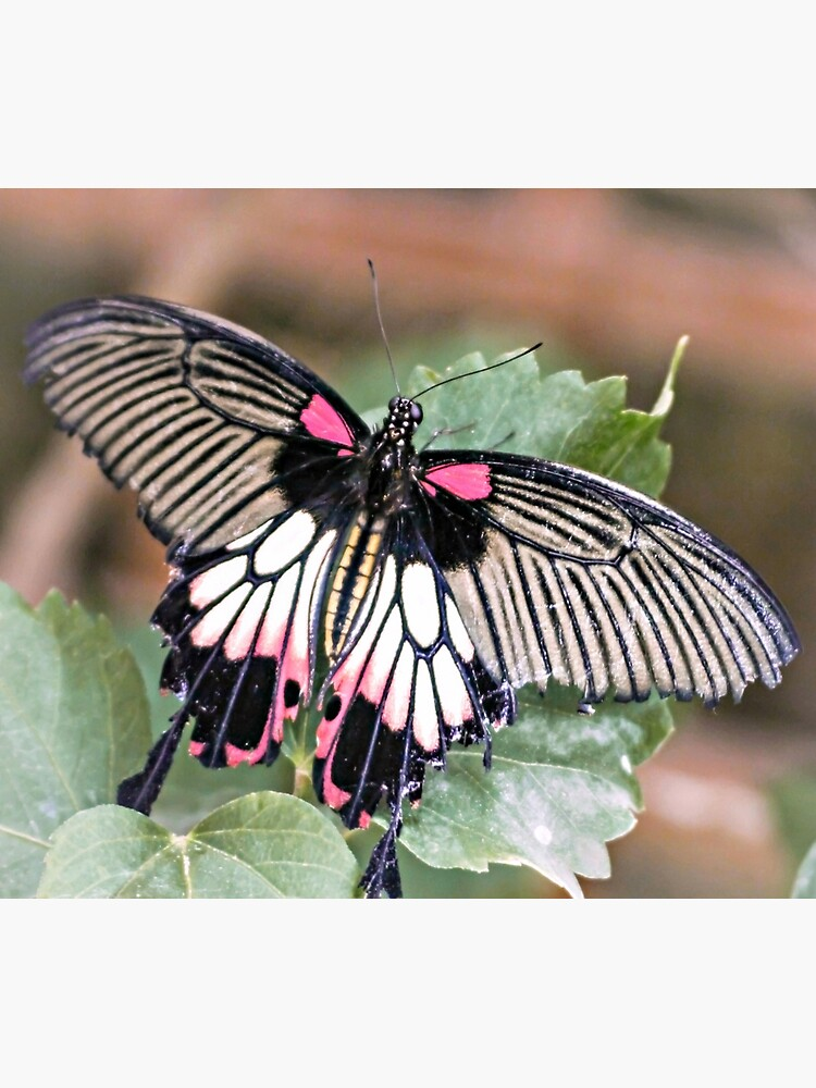 Majestic Tropical Butterfly by ScenicViewPics