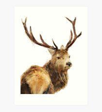 Winter Red Deer Art Print