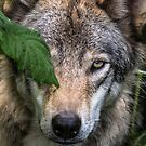 Timber Wolves - Up Close And Personal by Michael Cummings