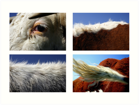 4 cows by David Tovey