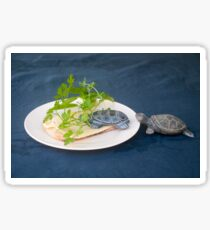Adding fibers to food as food for tortoises, humouristic approach  Sticker