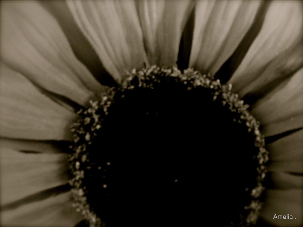 sunflower by Amelia .