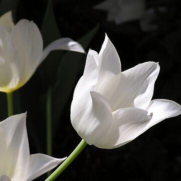 Born to Garden, with Tulip by BettyMackey