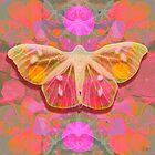 Pink Glow Butterfly by MarCanton
