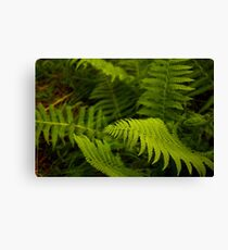 Macro Ferns Canvas Print