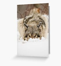Whose The Pretty Puppy? Greeting Card