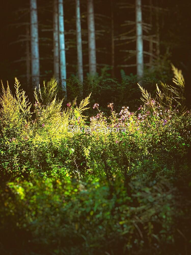 Tall birches II by Silvia Ganora