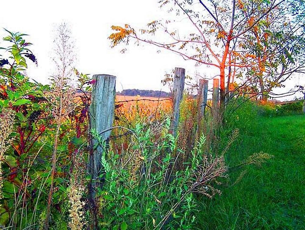 Homestead Fence by jillybean