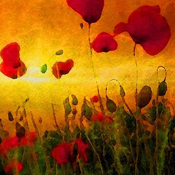 Poppy Sunset (4008 views as of 101618) by BunnyClarke