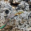 Curacao Lizard by Kasia-D