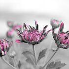 Pretty Purple Zoombie by Mubasher Kaleem