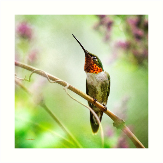 Hummingbird Looking Square by Christina Rollo