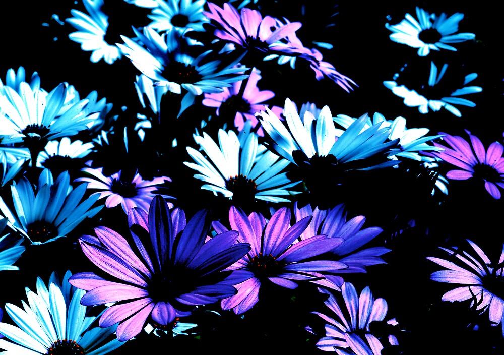 colour in life  by alfarman