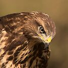 Buzzard - II by Peter Wiggerman