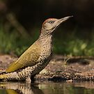 Green Woodpecker - I by Peter Wiggerman