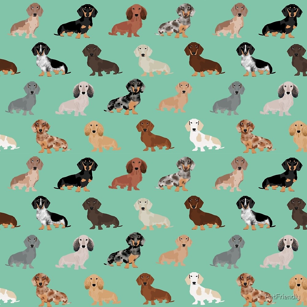 Dachshund dog breed pattern dapple merle black and tan coat colors by PetFriendly