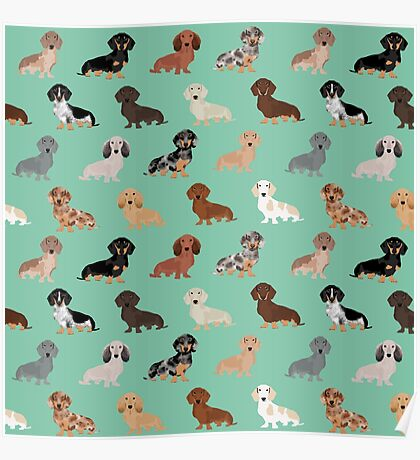 Dachshund dog breed pattern dapple merle black and tan coat colors Poster