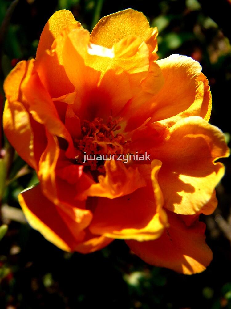 Orange Shadows by jwawrzyniak