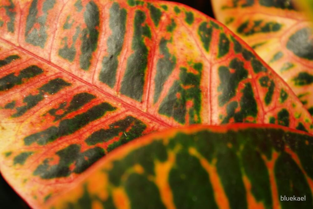 leaf by bluekael