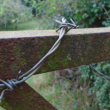 Barbed wire wrapped round gate by MadeInStreet