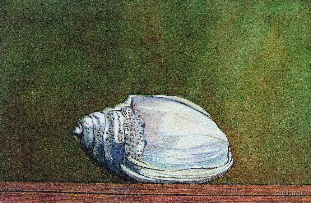 The Shell V by saniismail
