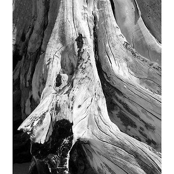 Kanaha Driftwood by srwdesign